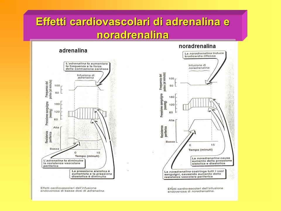 Effetti cardiovascolari di adrenalina e noradrenalina