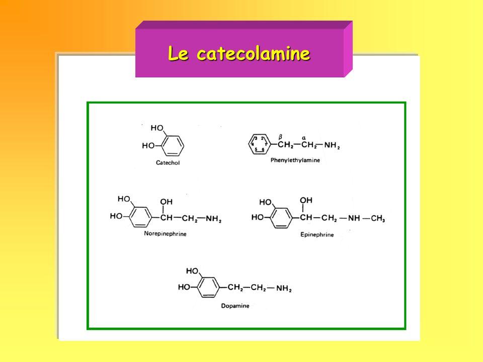 Le catecolamine