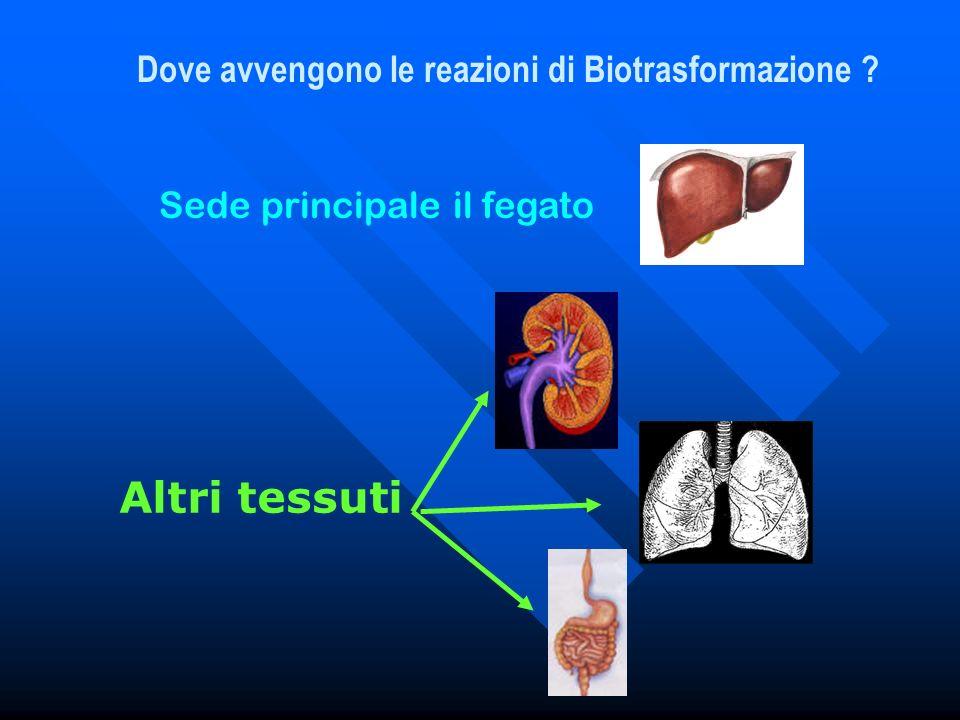 Dove avvengono le reazioni di Biotrasformazione