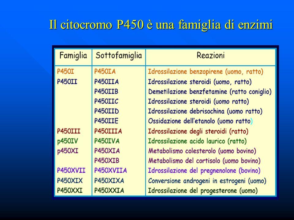 Il citocromo P450 è una famiglia di enzimi