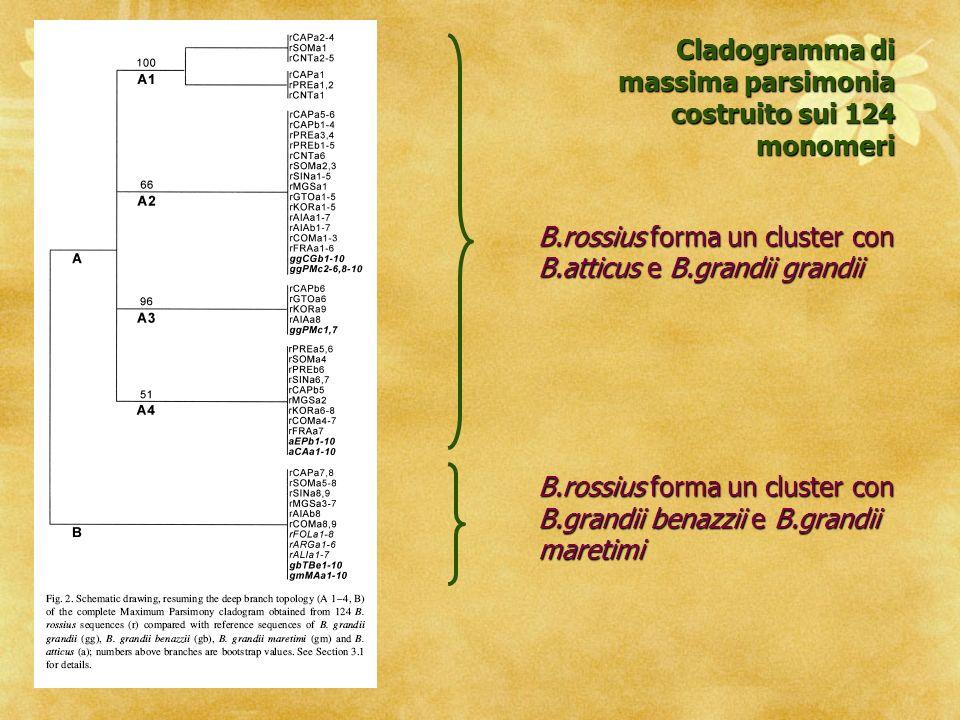 Cladogramma di massima parsimonia costruito sui 124 monomeri