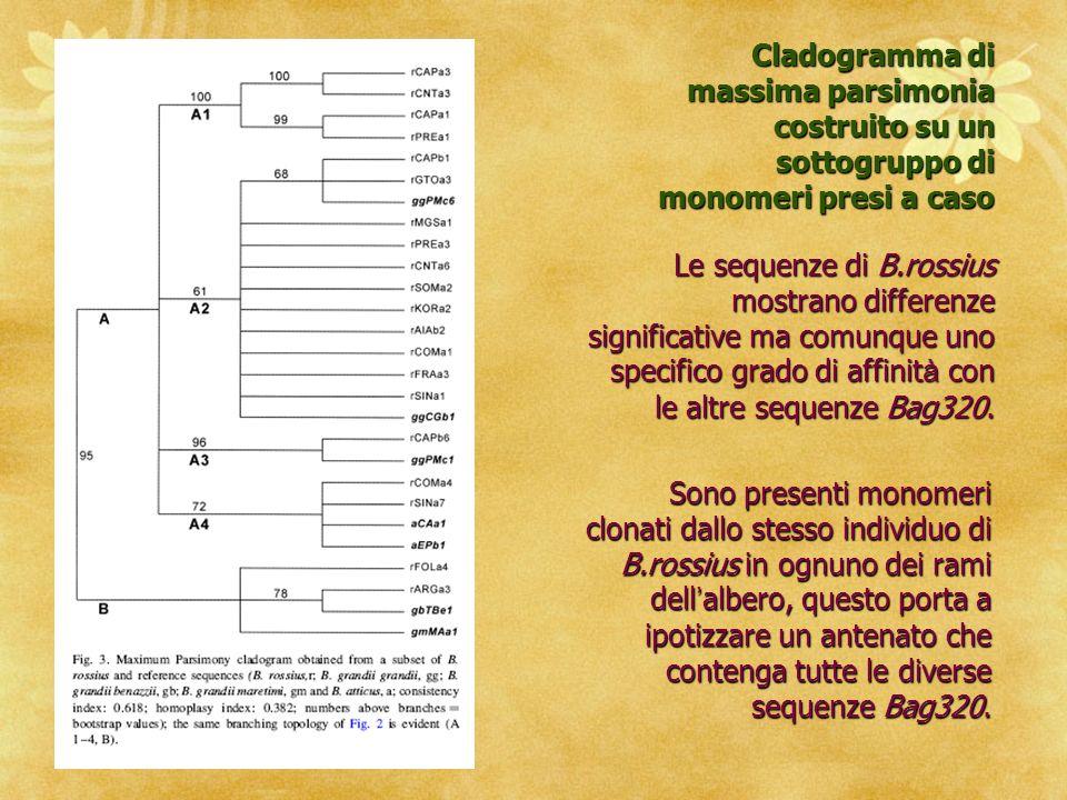 Cladogramma di massima parsimonia costruito su un sottogruppo di monomeri presi a caso