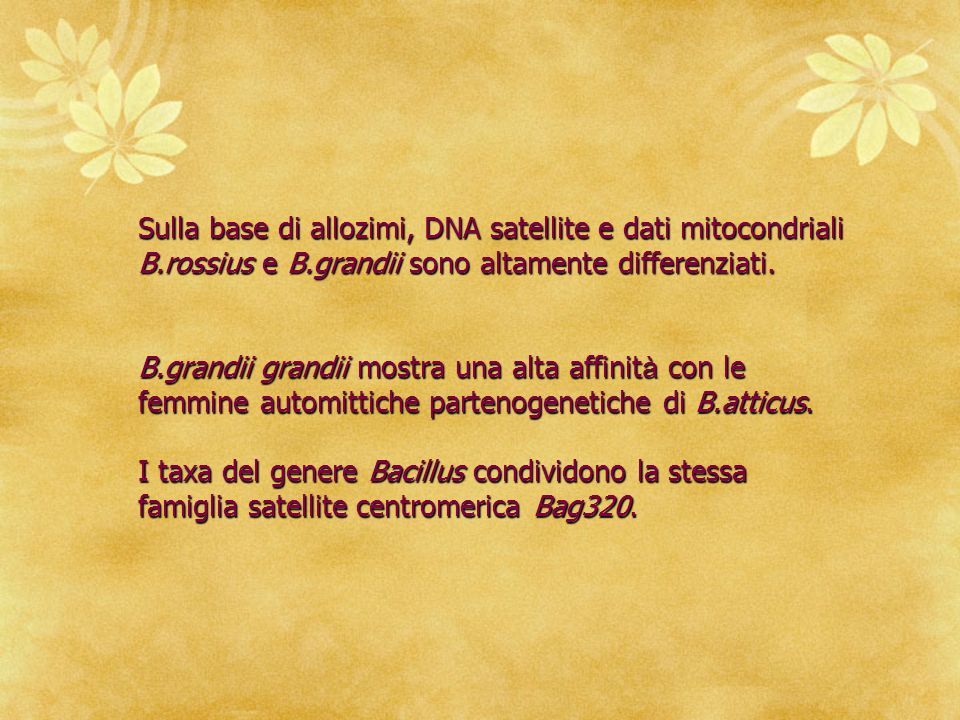 Sulla base di allozimi, DNA satellite e dati mitocondriali B