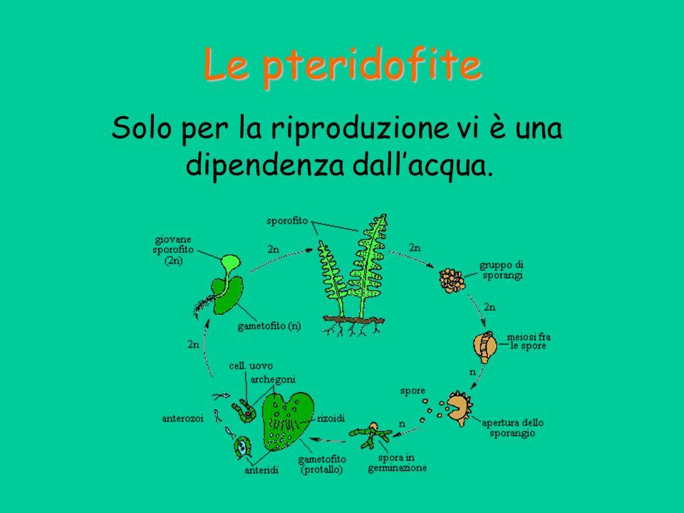 Solo per la riproduzione vi è una dipendenza dall'acqua.