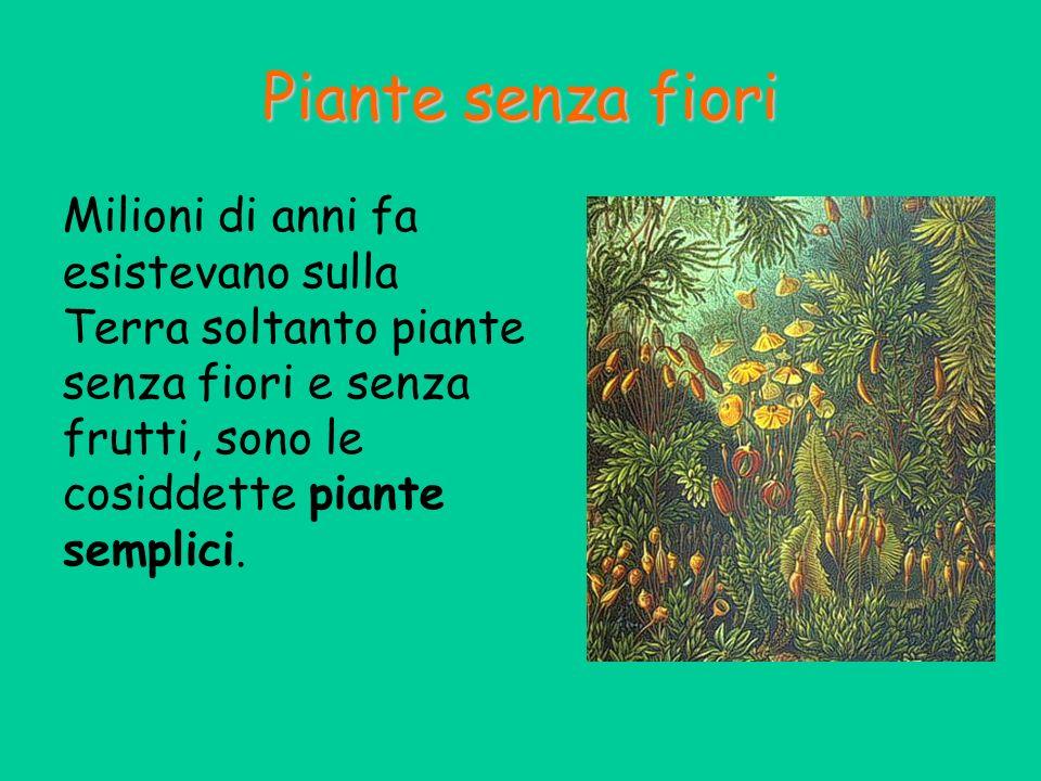 Piante senza fiori Milioni di anni fa esistevano sulla Terra soltanto piante senza fiori e senza frutti, sono le cosiddette piante semplici.