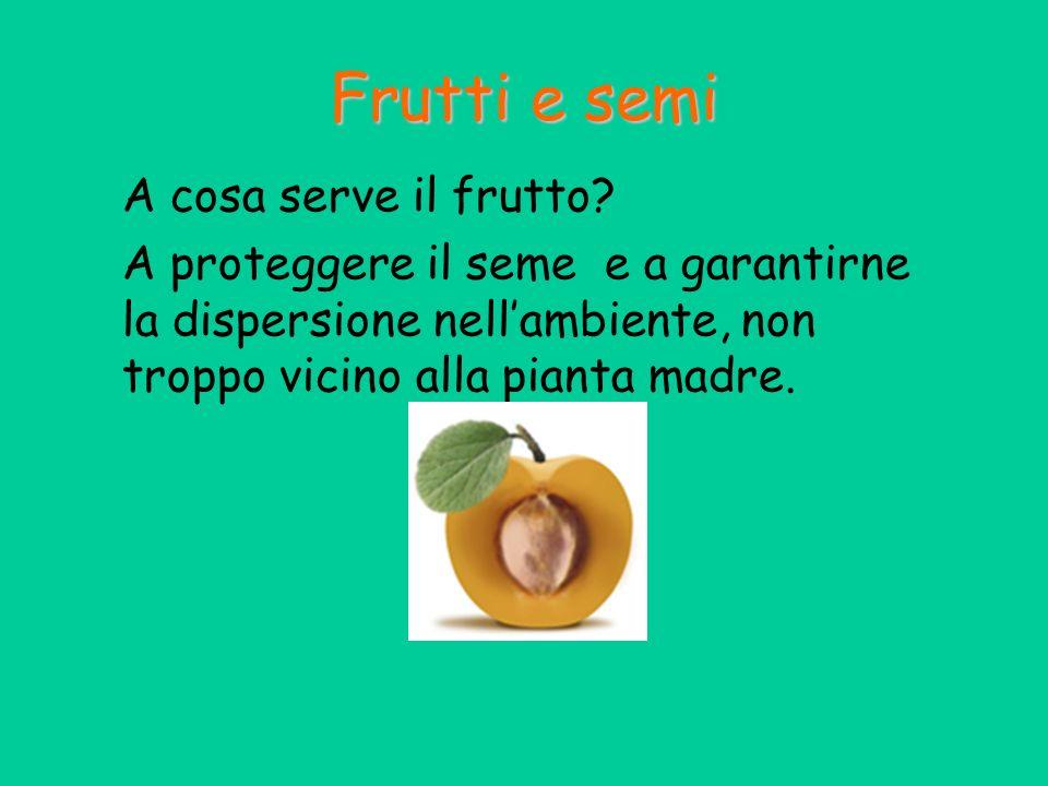 Frutti e semi A cosa serve il frutto