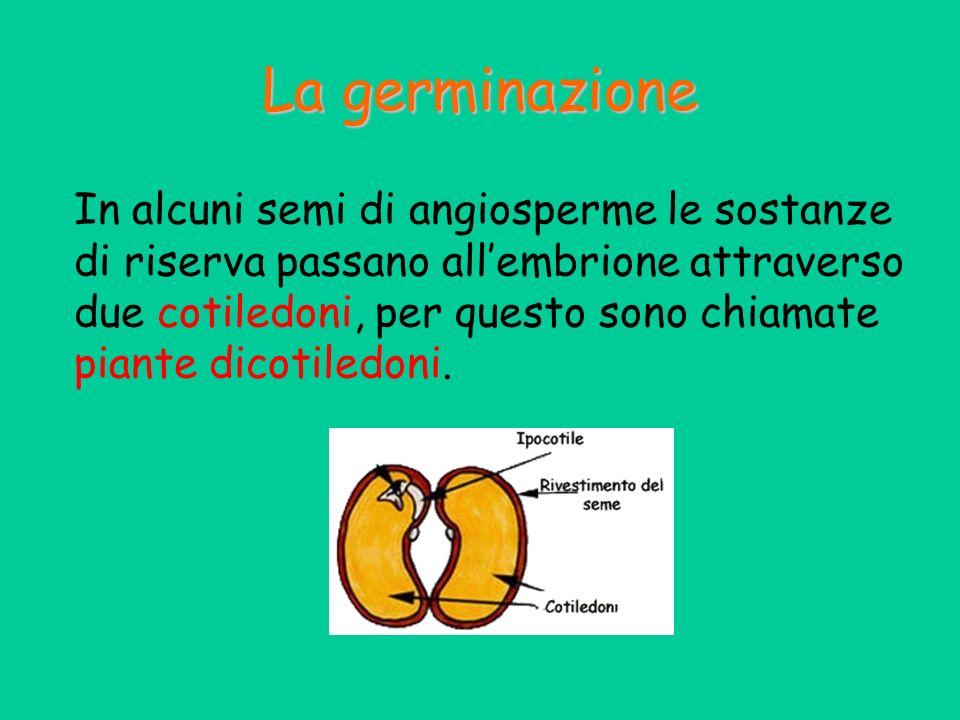 La germinazione