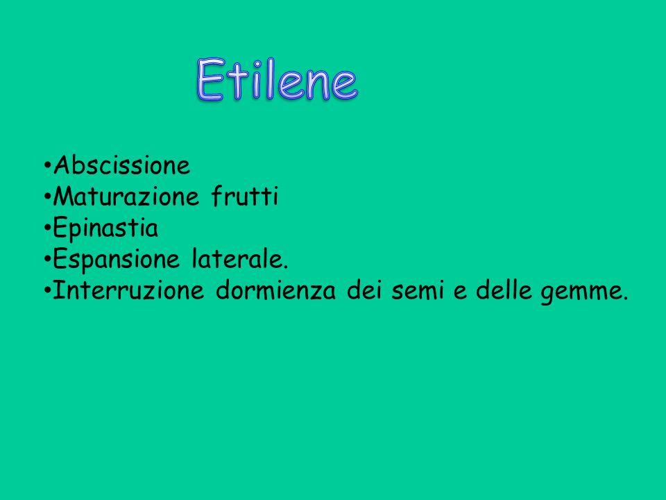 Etilene Abscissione Maturazione frutti Epinastia Espansione laterale.
