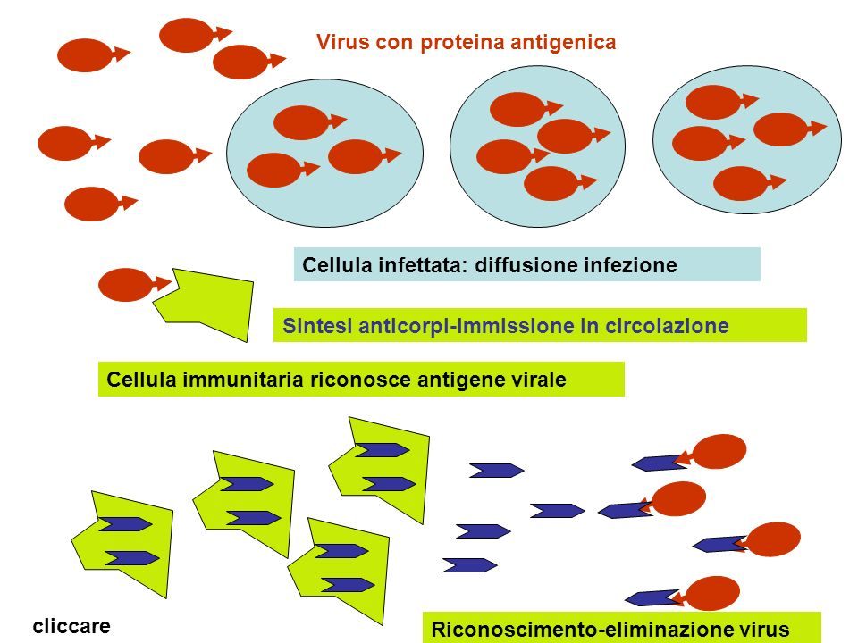 Virus con proteina antigenica