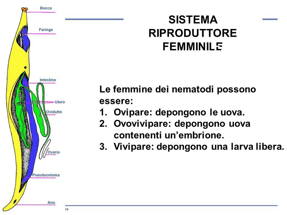 SISTEMA RIPRODUTTORE FEMMINILE
