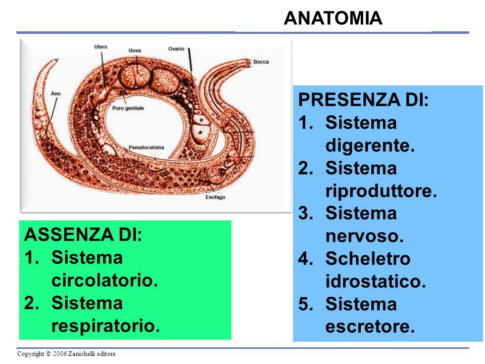 ANATOMIA PRESENZA DI: Sistema digerente. Sistema riproduttore. Sistema nervoso. Scheletro idrostatico.