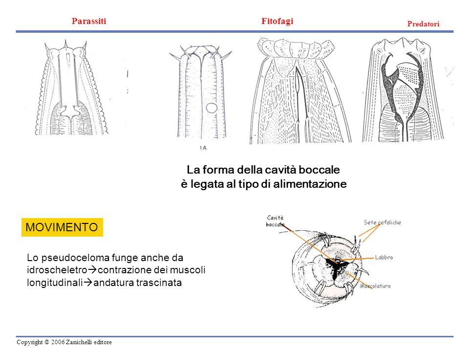 La forma della cavità boccale è legata al tipo di alimentazione