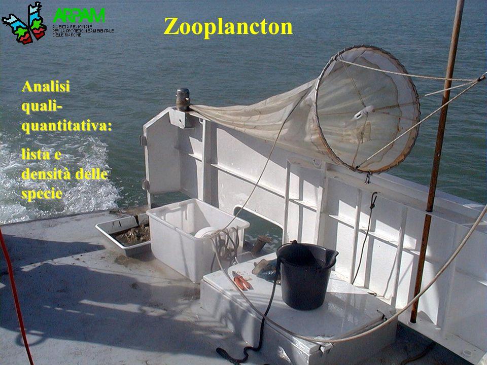 Zooplancton Analisi quali-quantitativa: lista e densità delle specie