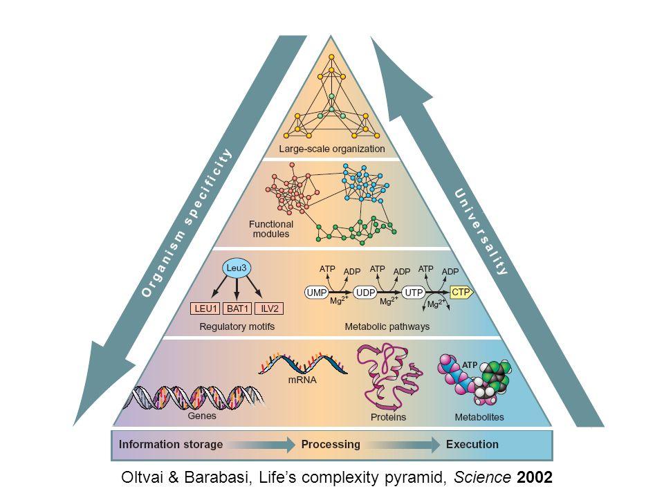 Oltvai & Barabasi, Life's complexity pyramid, Science 2002