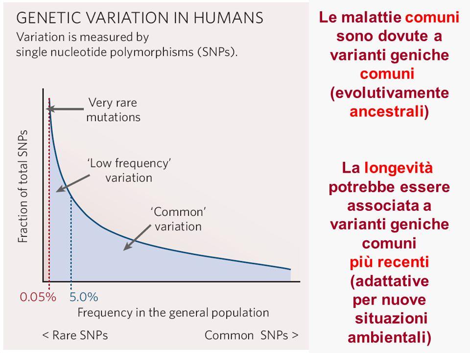 Le malattie comunisono dovute a. varianti geniche. comuni. (evolutivamente. ancestrali) La longevità.