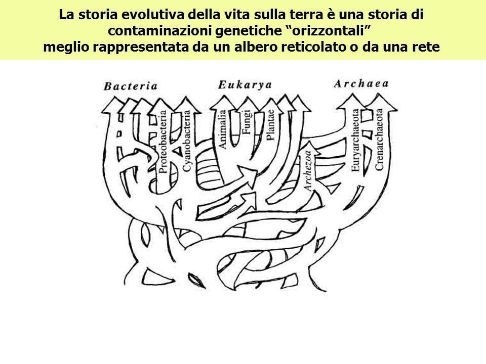 La storia evolutiva della vita sulla terra è una storia di