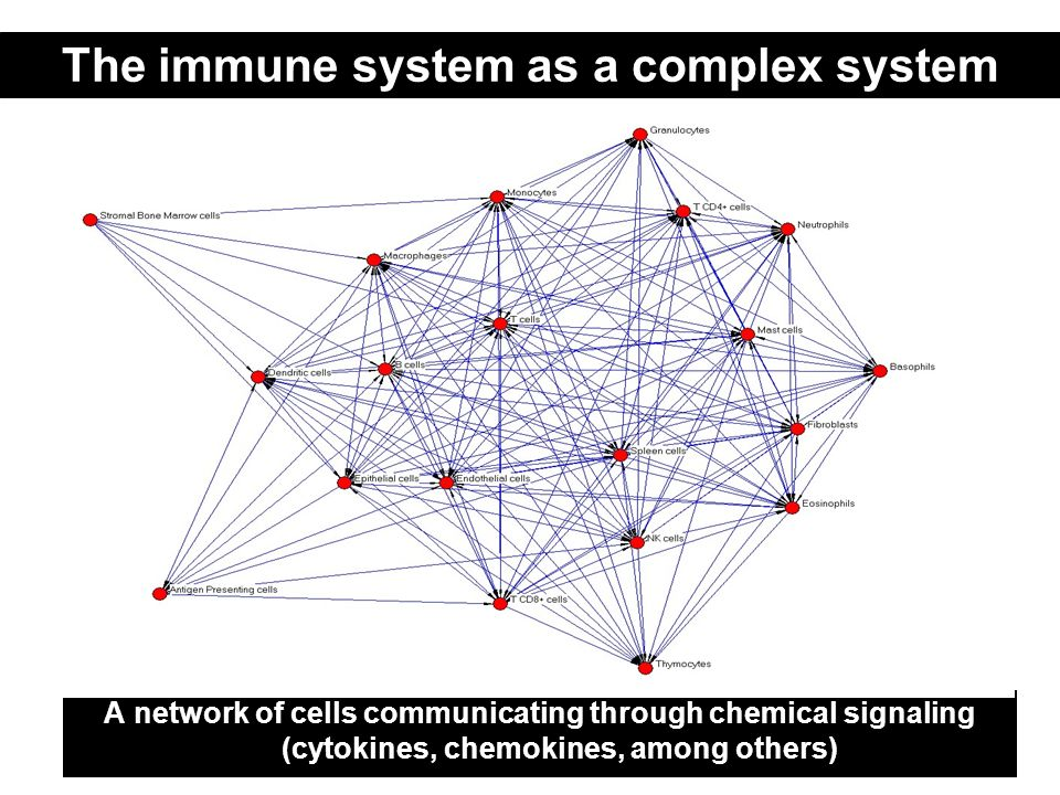 The immune system as a complex system