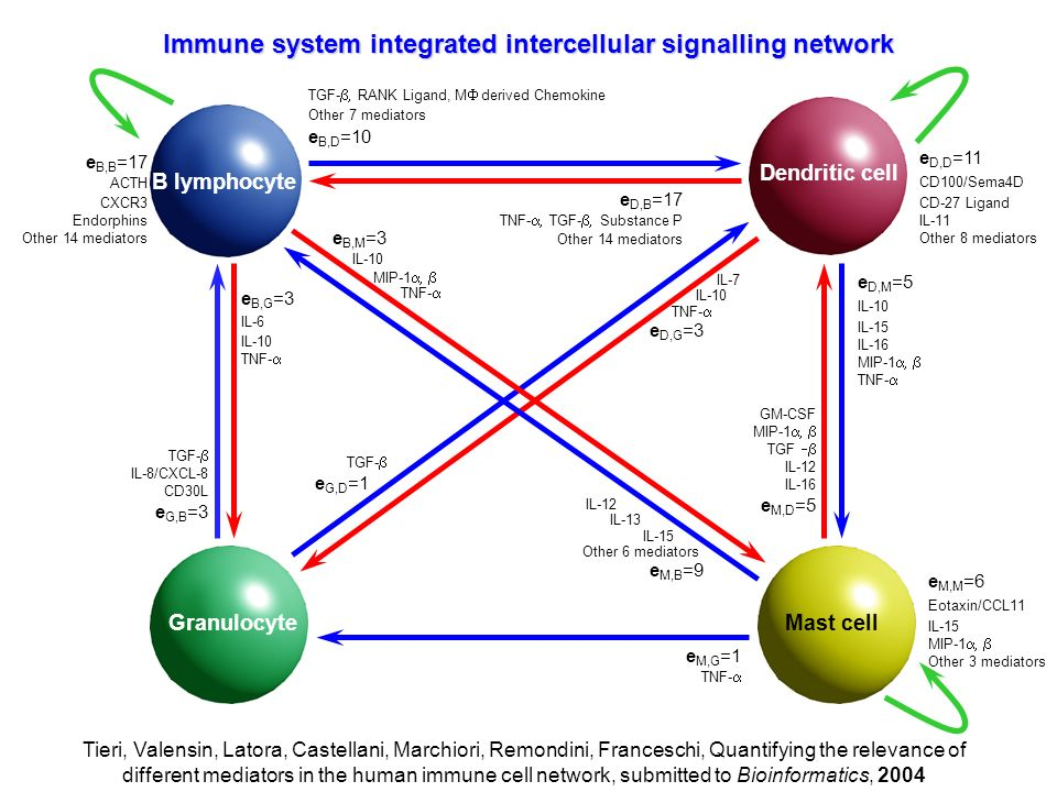 Immune system integrated intercellular signalling network