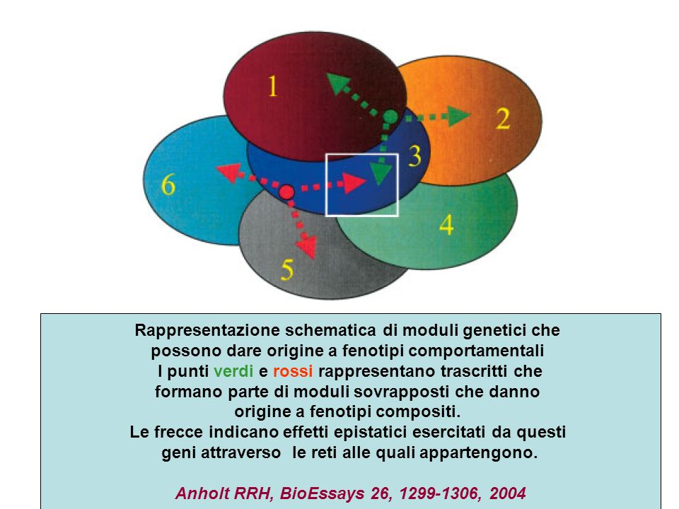 Rappresentazione schematica di moduli genetici che