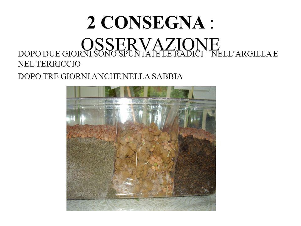 2 CONSEGNA : OSSERVAZIONE