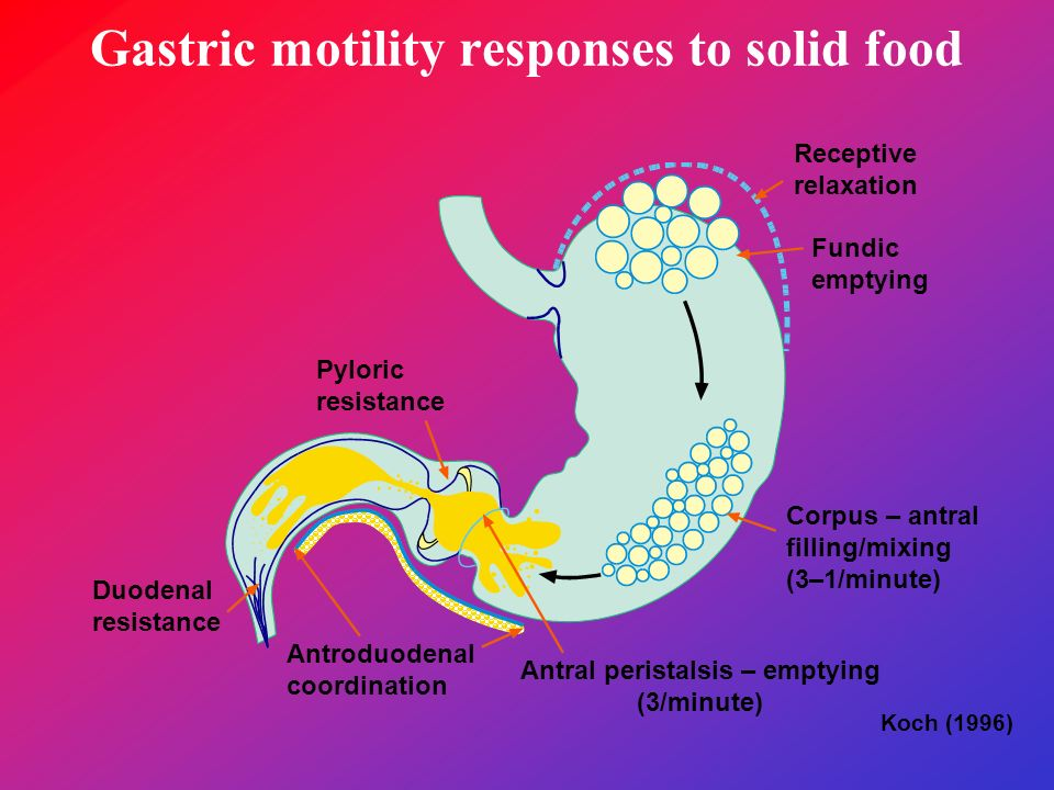 Gastric motility responses to solid food