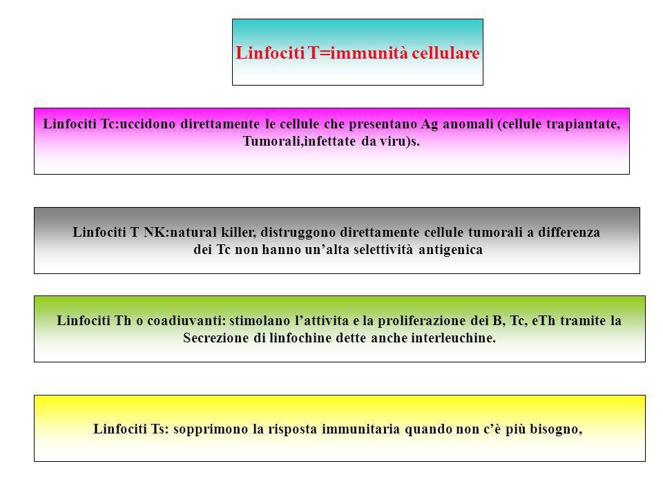 Linfociti T=immunità cellulare