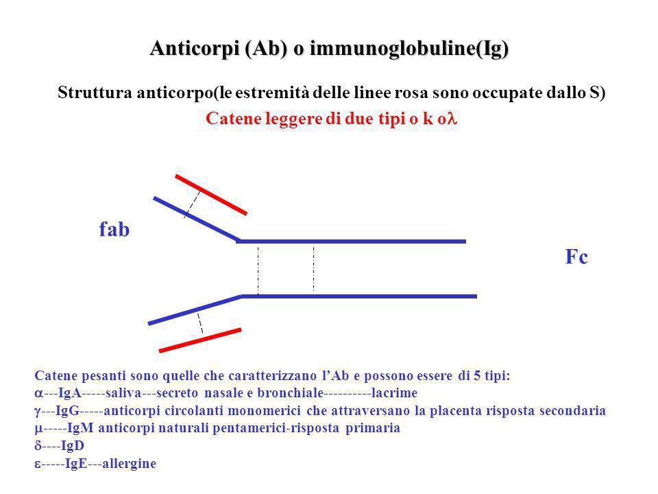 Anticorpi (Ab) o immunoglobuline(Ig)