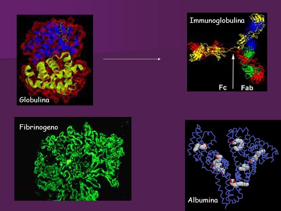 Immunoglobulina Globulina Fibrinogeno Albumina