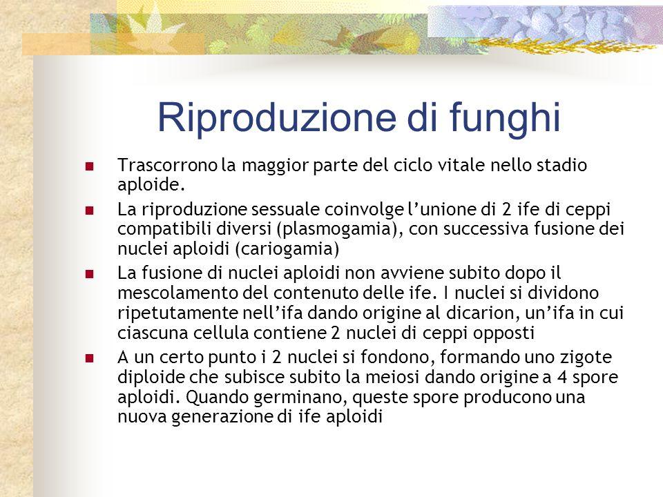 Riproduzione di funghi