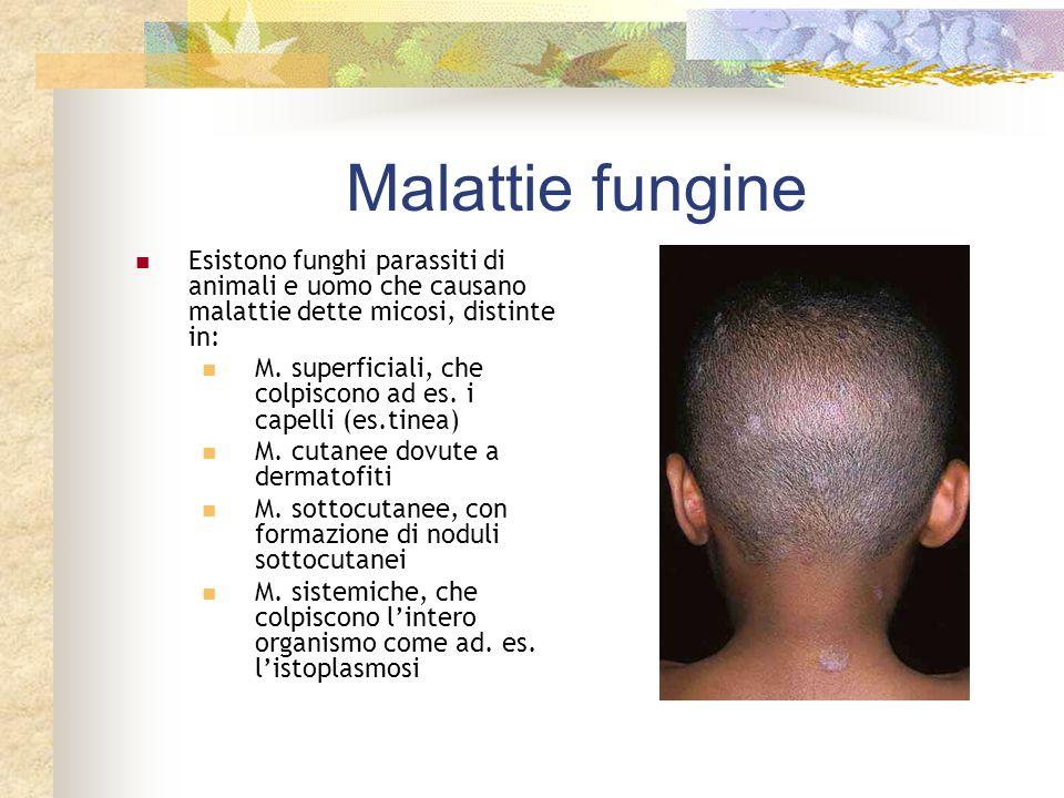 Malattie fungine Esistono funghi parassiti di animali e uomo che causano malattie dette micosi, distinte in:
