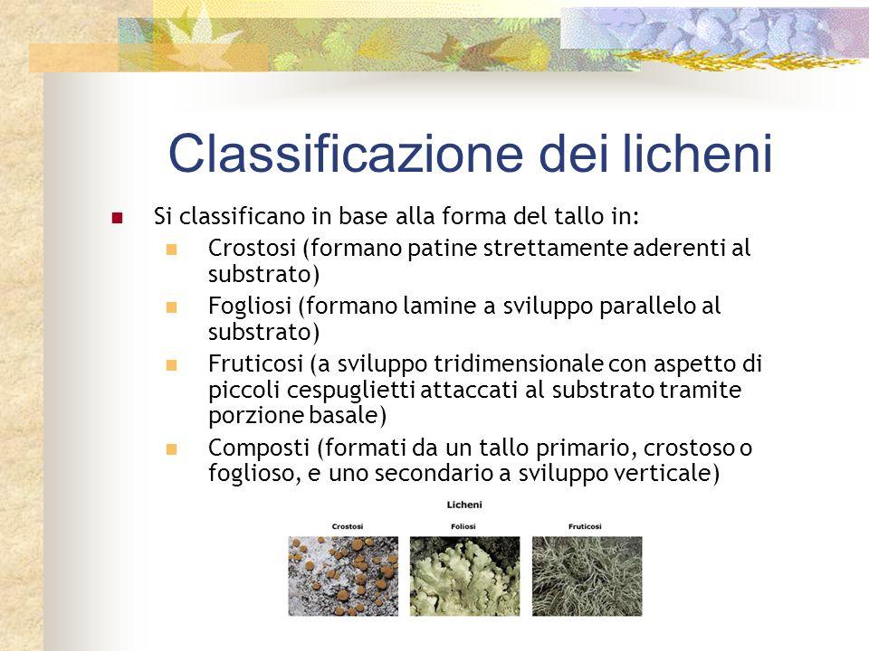 Classificazione dei licheni
