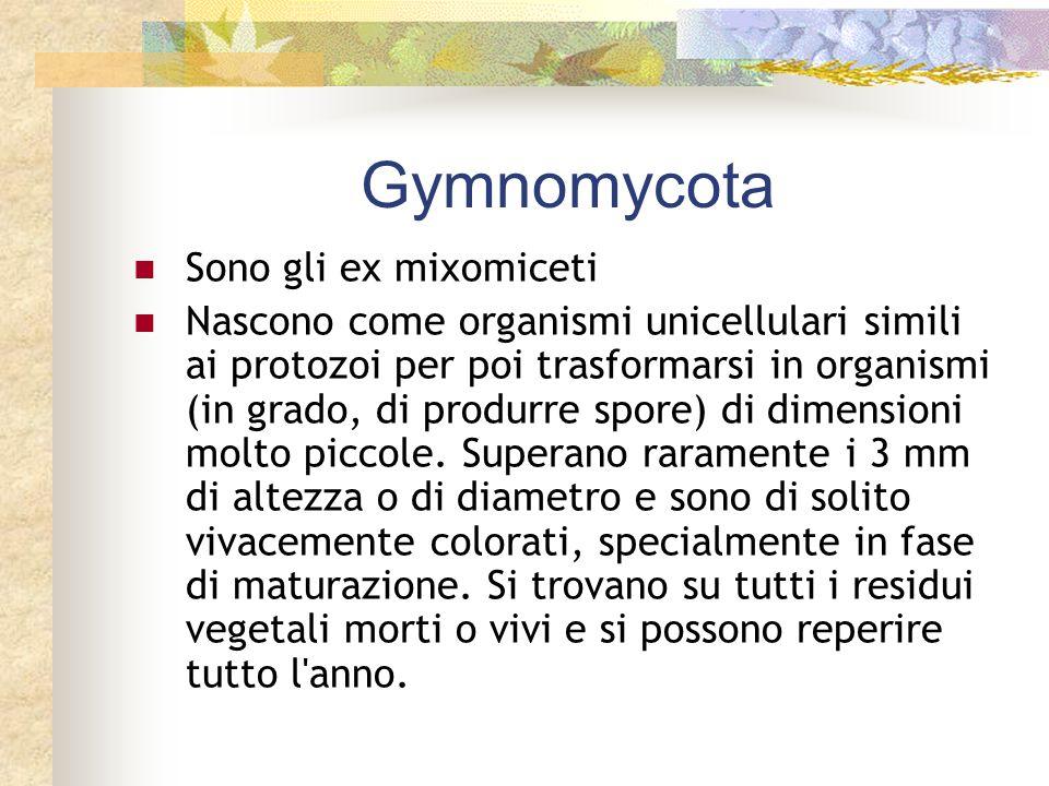 Gymnomycota Sono gli ex mixomiceti