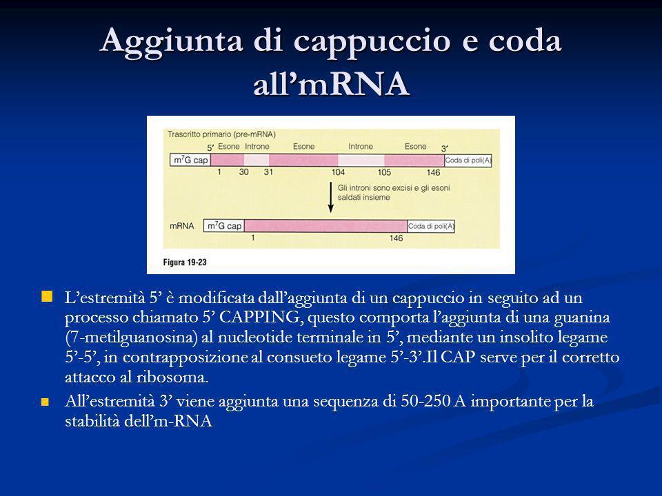 Aggiunta di cappuccio e coda all'mRNA