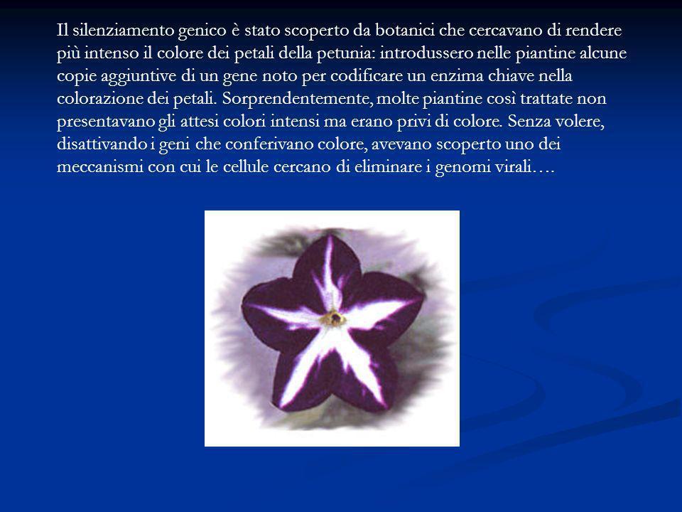 Il silenziamento genico è stato scoperto da botanici che cercavano di rendere più intenso il colore dei petali della petunia: introdussero nelle piantine alcune copie aggiuntive di un gene noto per codificare un enzima chiave nella colorazione dei petali.