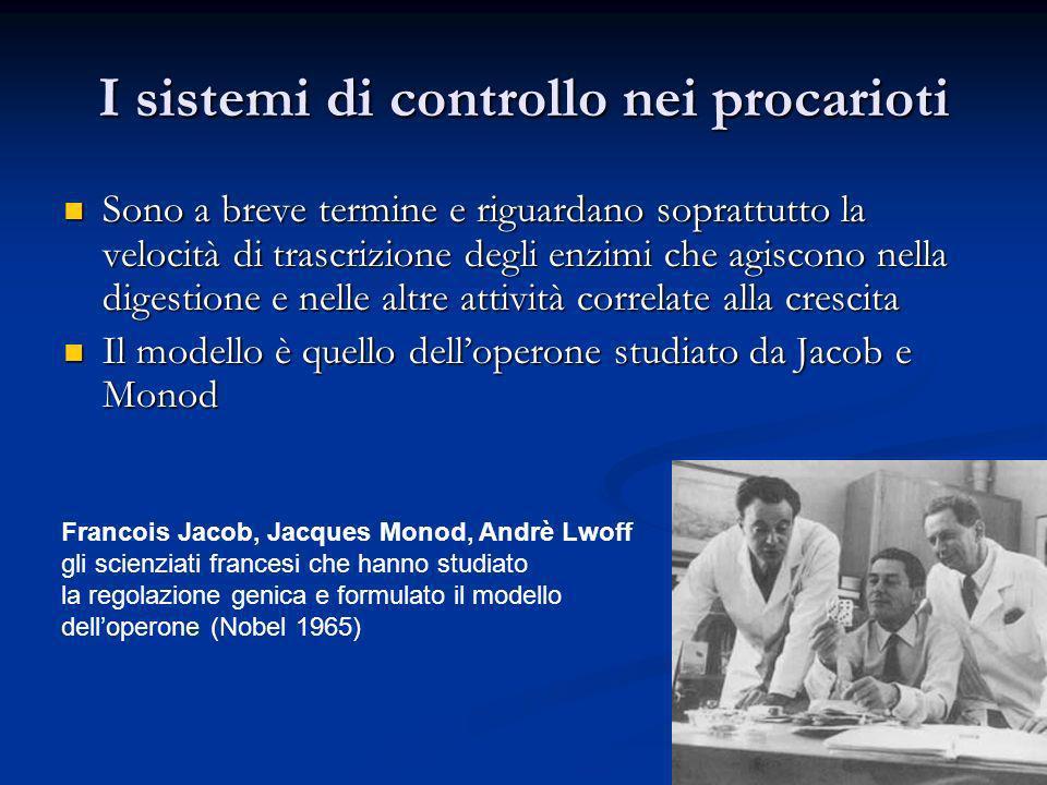 I sistemi di controllo nei procarioti