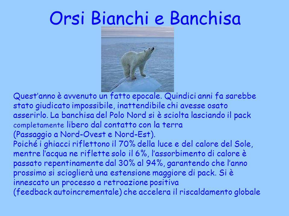 Orsi Bianchi e Banchisa