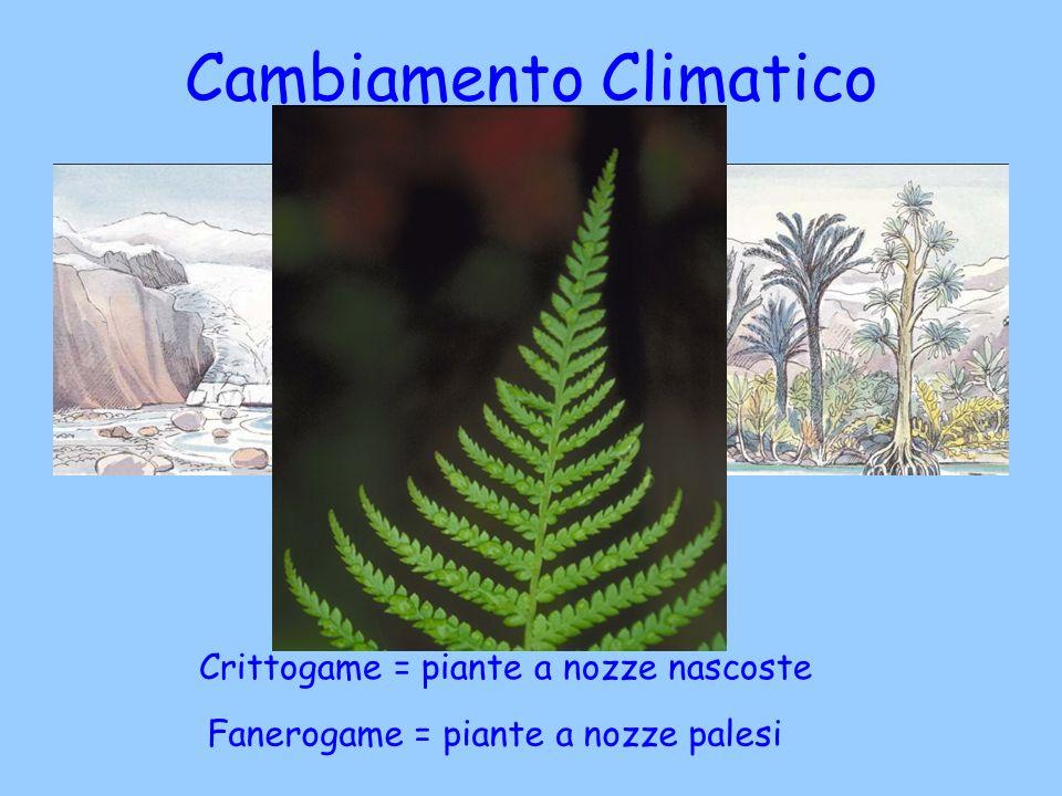Cambiamento Climatico registrato nella pietra