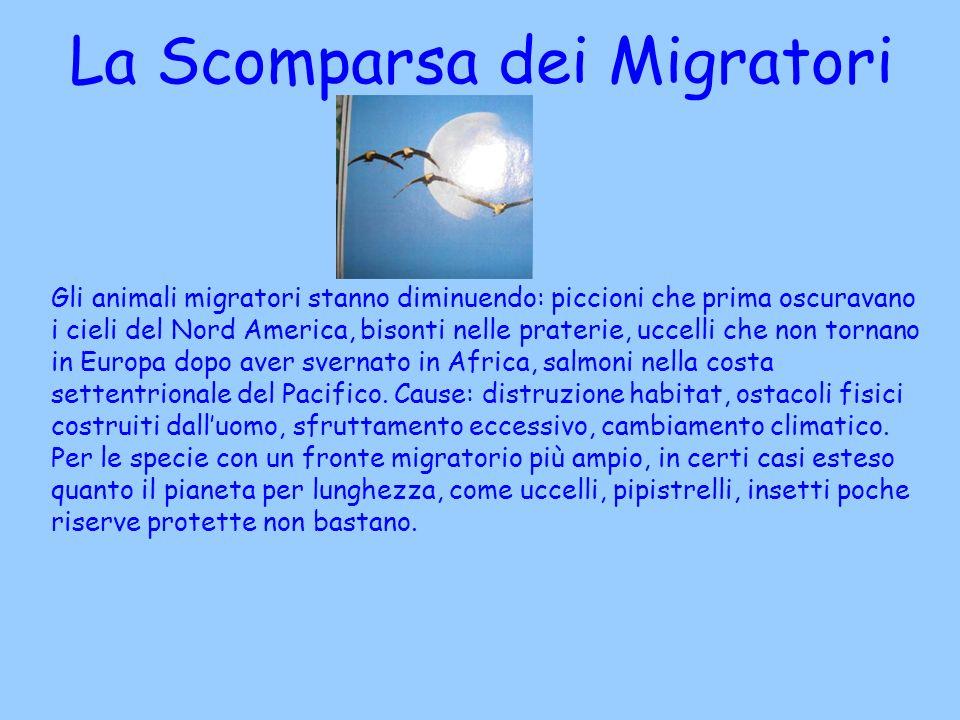 La Scomparsa dei Migratori
