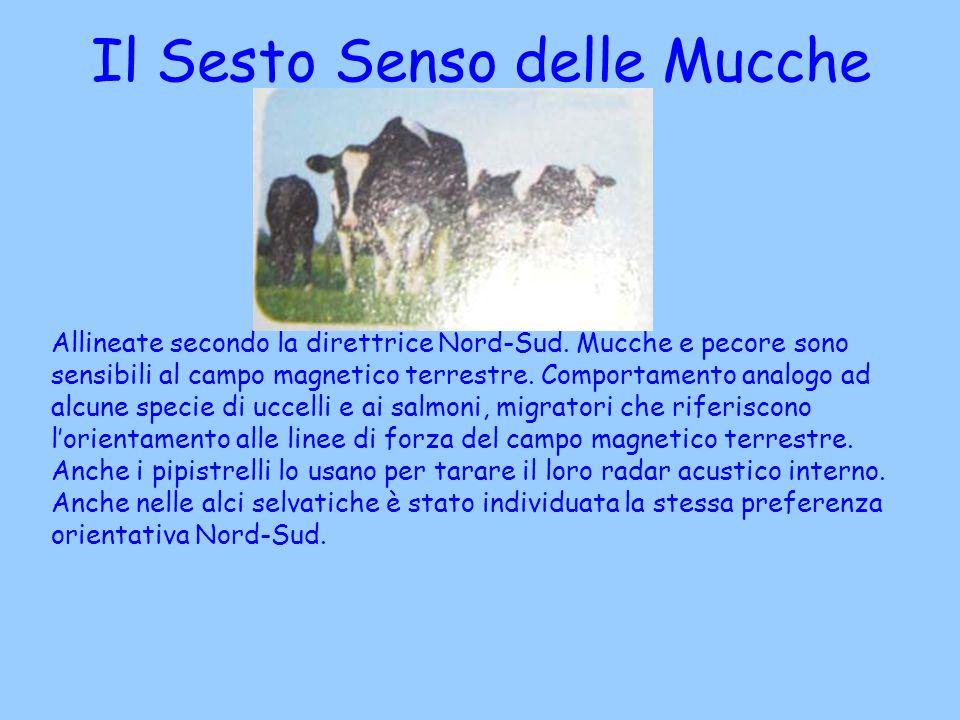 Il Sesto Senso delle Mucche
