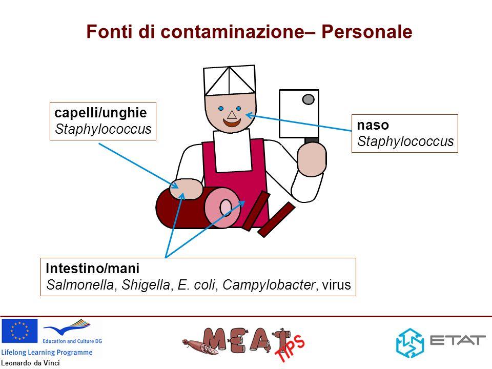 Fonti di contaminazione– Personale