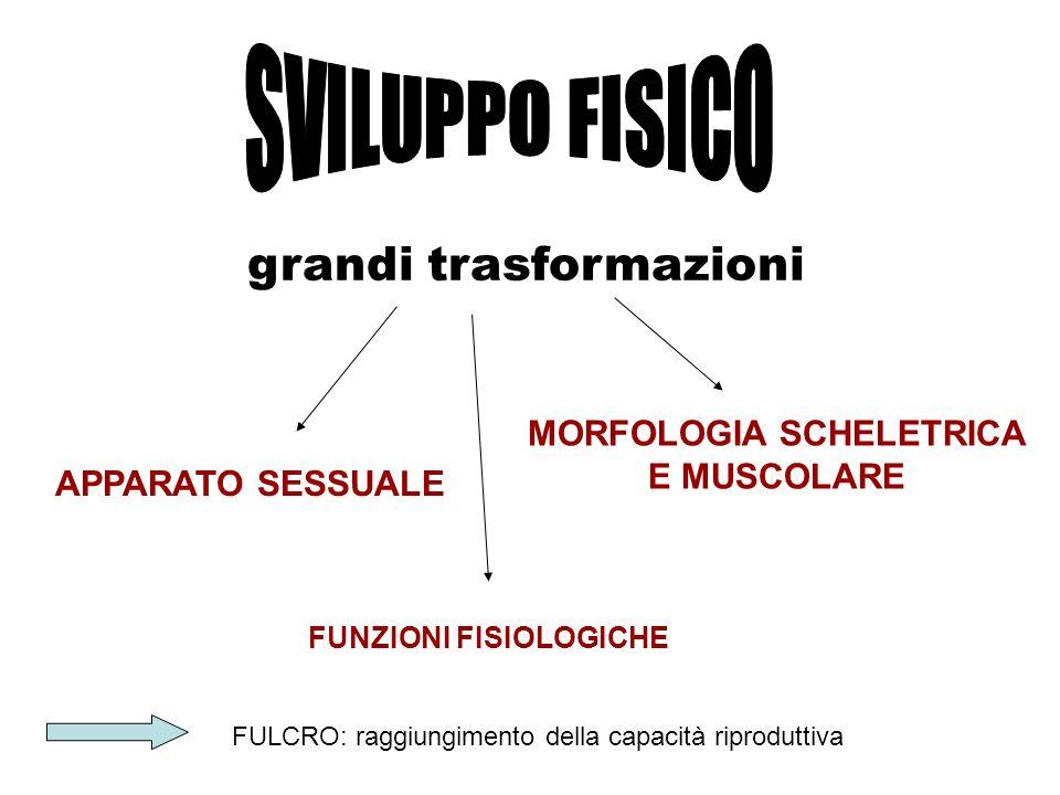 MORFOLOGIA SCHELETRICA E MUSCOLARE FUNZIONI FISIOLOGICHE
