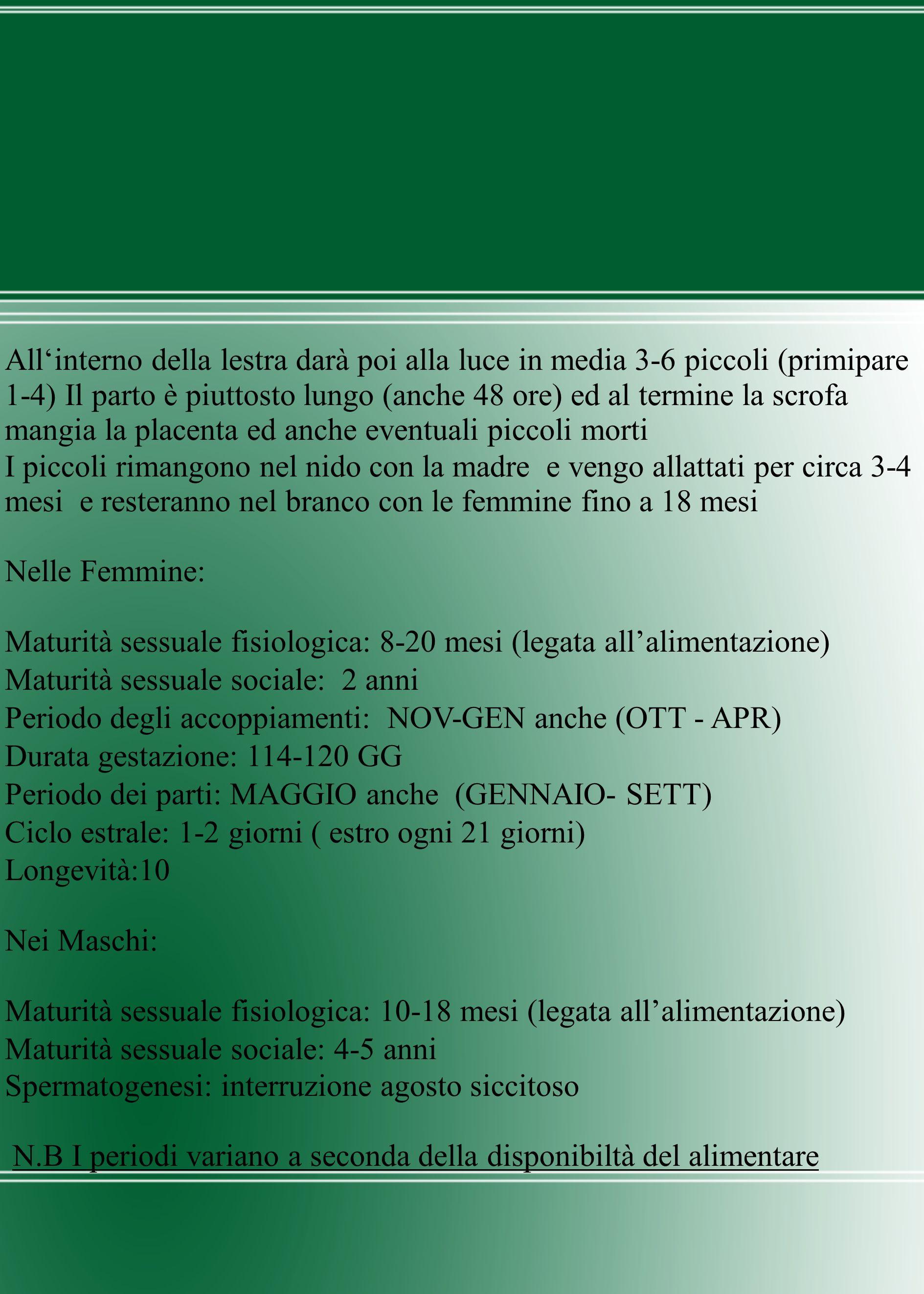 Maturità sessuale fisiologica: 8-20 mesi (legata all'alimentazione)
