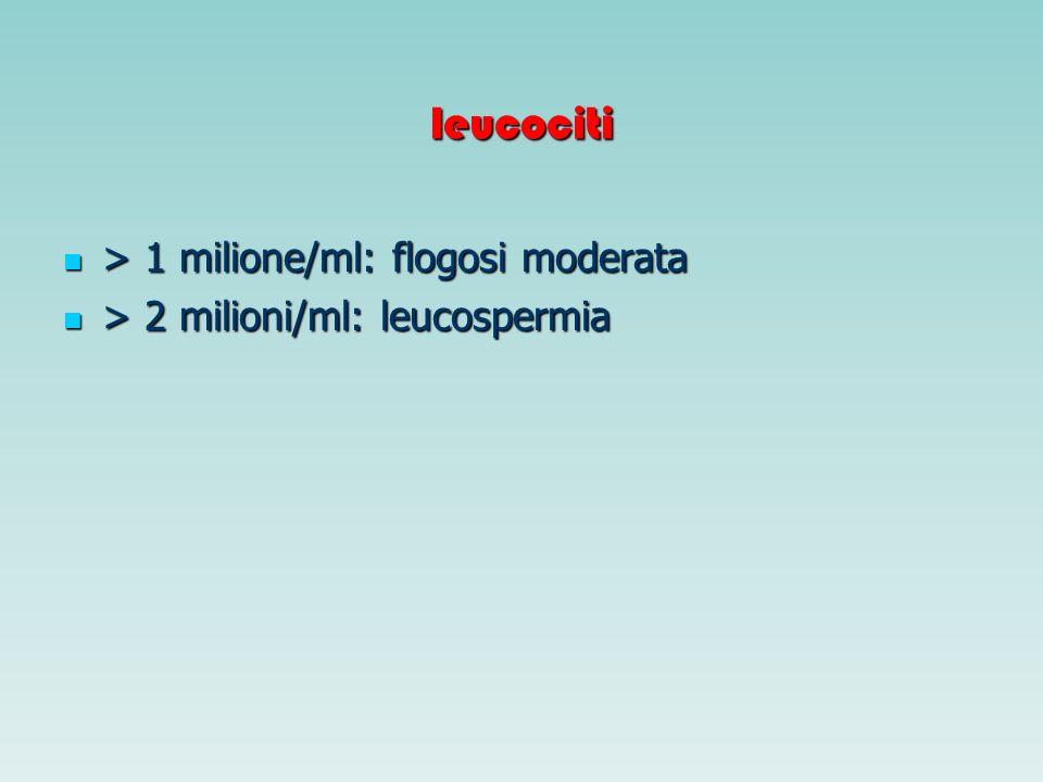 leucociti > 1 milione/ml: flogosi moderata