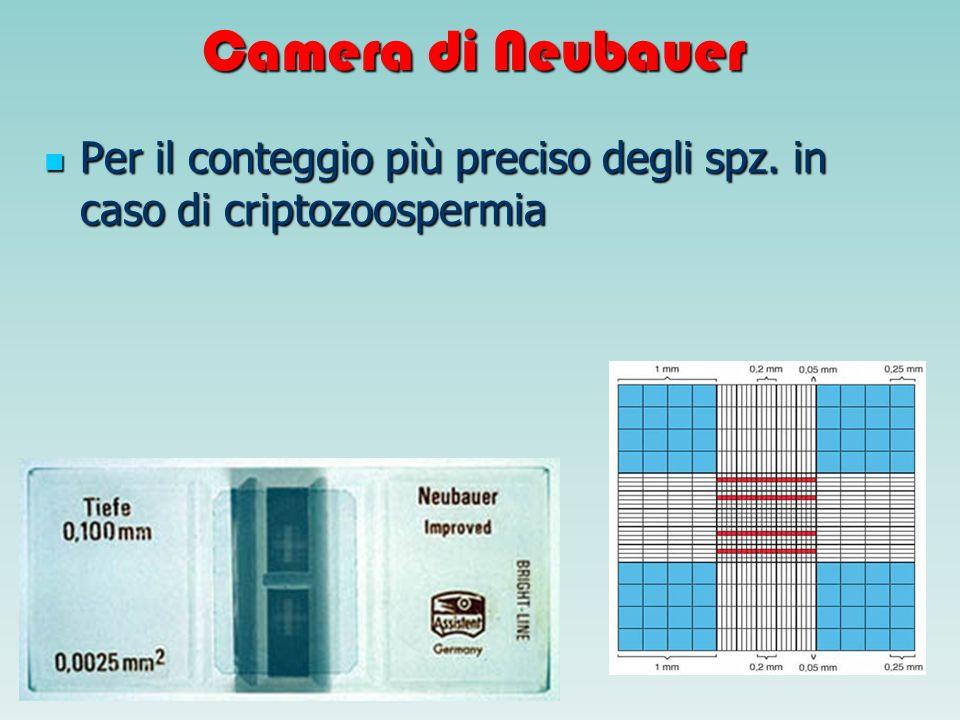 Camera di Neubauer Per il conteggio più preciso degli spz. in caso di criptozoospermia