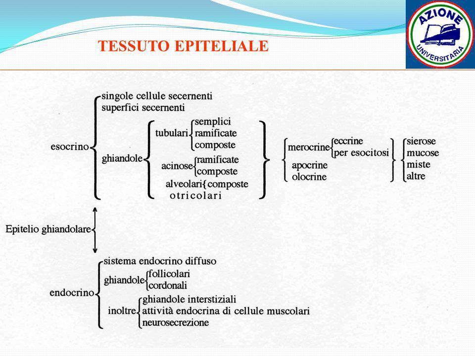 TESSUTO EPITELIALE