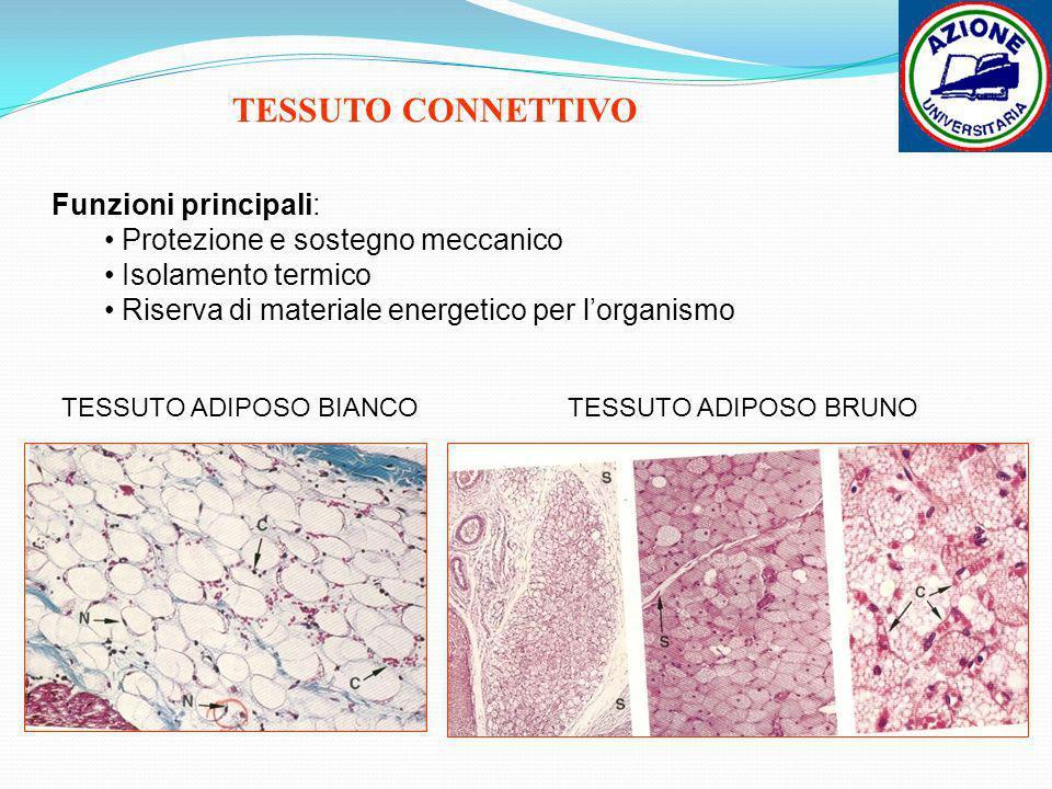 TESSUTO ADIPOSO BIANCO
