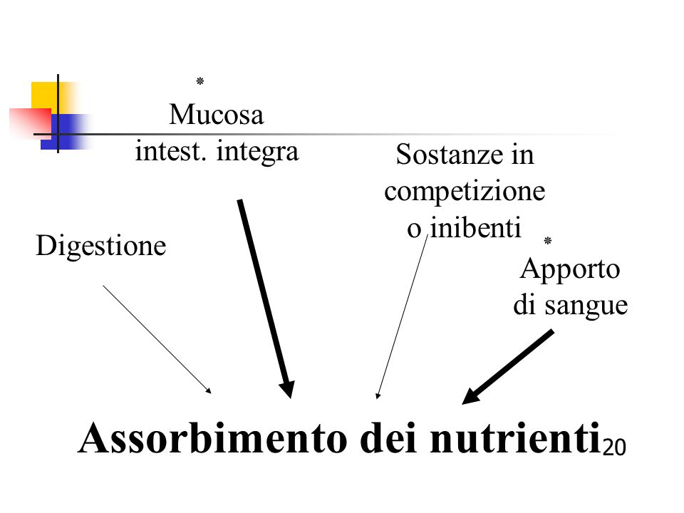 Assorbimento dei nutrienti
