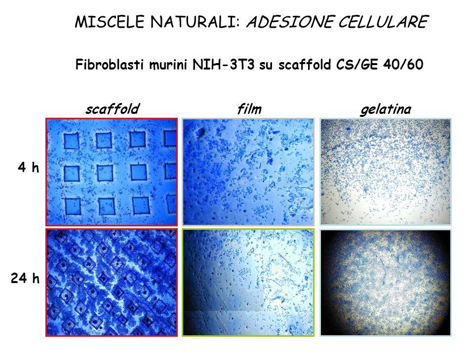 MISCELE NATURALI: ADESIONE CELLULARE