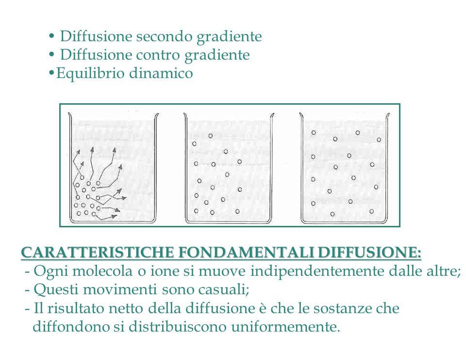 Diffusione secondo gradiente
