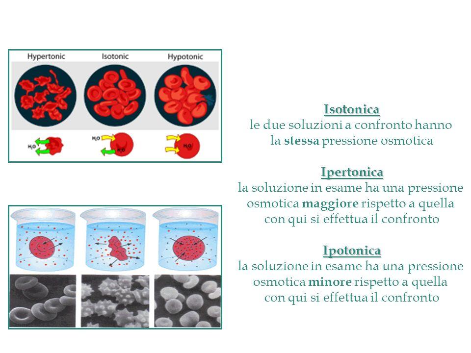 Isotonica Ipertonica Ipotonica
